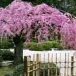 Выбираем цветы для сада в японском стиле